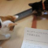 ねこじゃすり レビュー 感想 口コミ 三毛猫 キジ白
