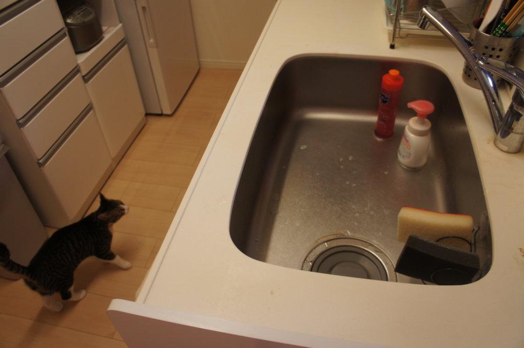キッチン 台所 キジ白