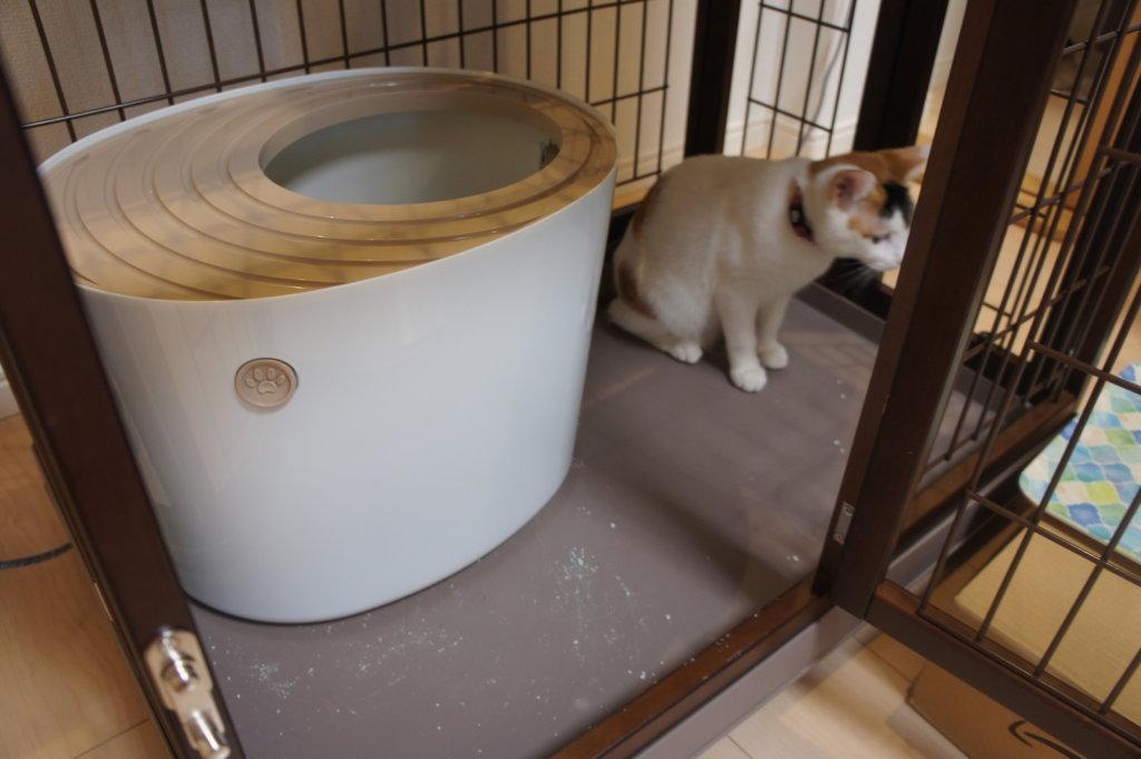 上から猫トイレ 三毛猫 あめ