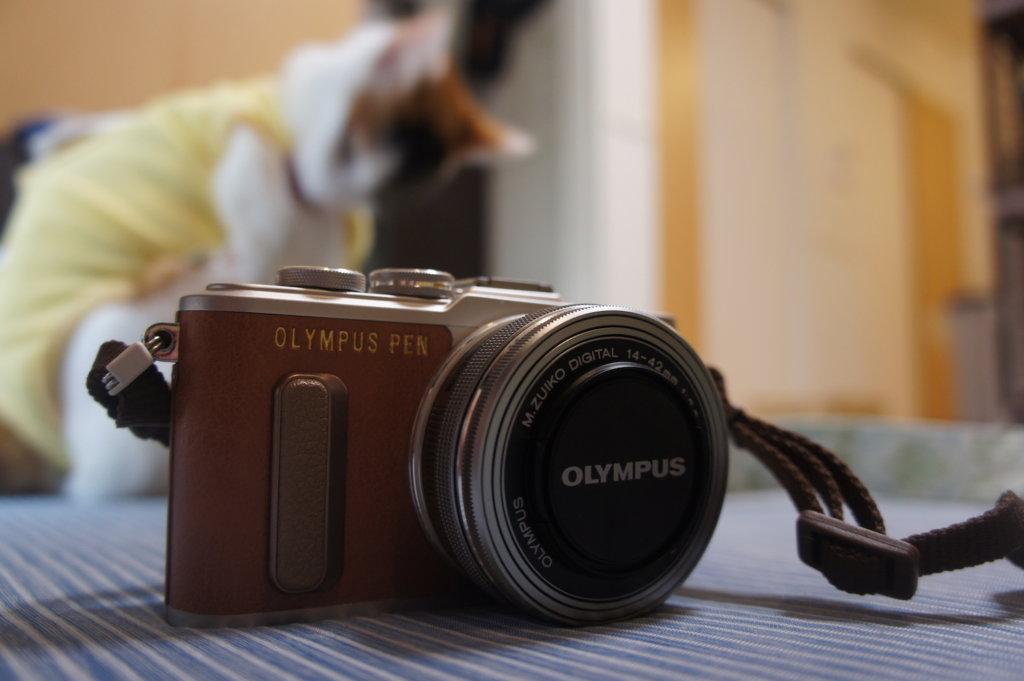 OLYMPUS E-PL8 カメラ女子 猫 ミラーレス一眼