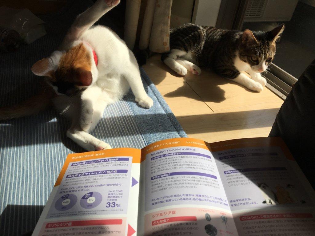 三毛猫 キジ白 血液検査 ウィルス検査 猫エイズ