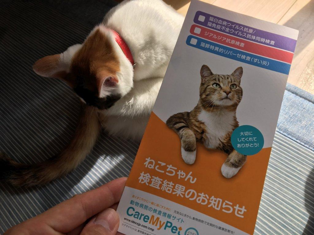 三毛猫 ウイルス検査 血液検査