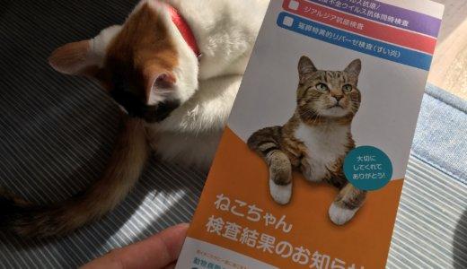 猫の避妊・去勢手術前検診の結果。手術は出来そうだけど・・・猫エイズキャリアの可能性が・・・