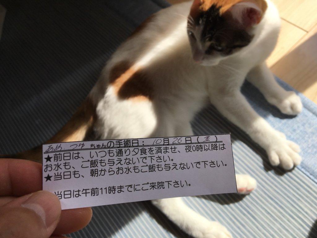手術予定日 猫 去勢 避妊