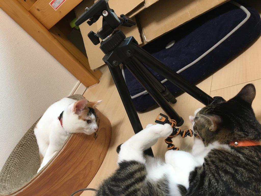 三脚 slik compact 猫