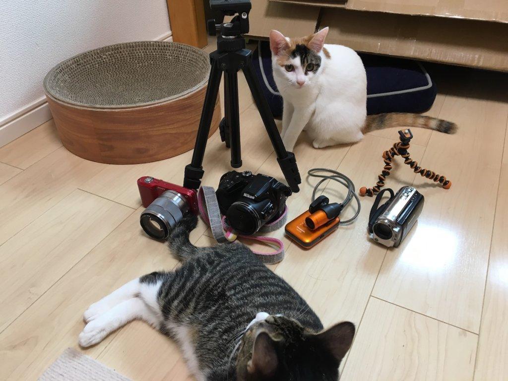 猫 カメラ 撮影機材