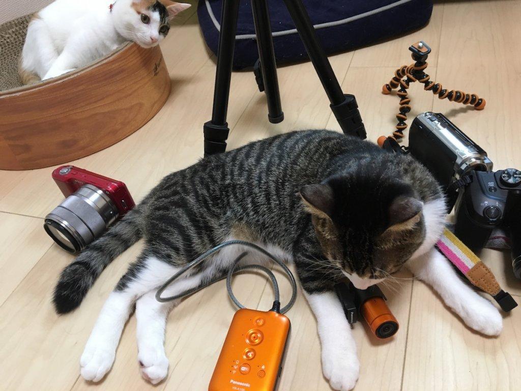 猫 キジ白 Panasonic HX-A100