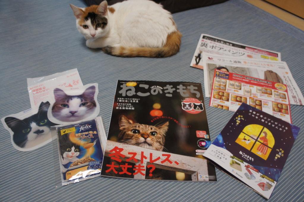 ねこのきもち ベネッセ 猫 雑誌