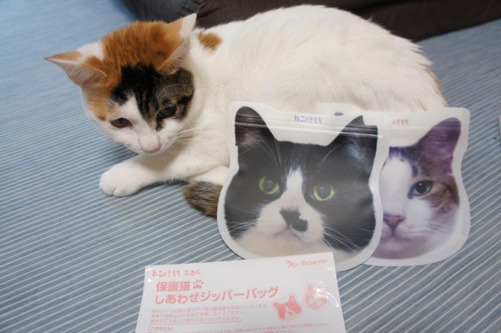 ねこのきもち ベネッセ 猫 雑誌 付録