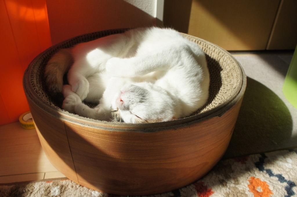 三毛猫 あめ 陽だまりの彼女 日向ぼっこ
