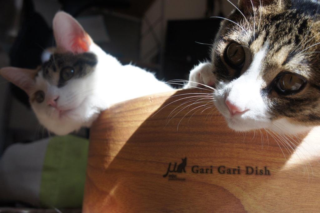 キジ白 三毛猫 日向ぼっこ