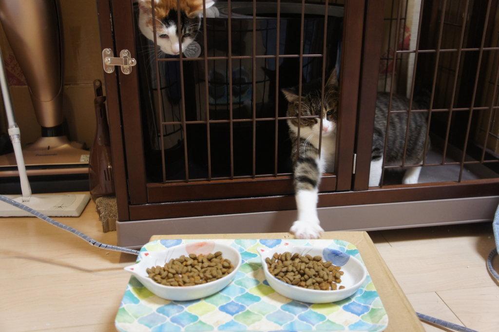 キャットフード 三毛猫 キジ白