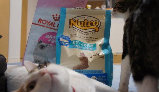 避妊・去勢猫用ご飯に変更!銘柄もロイヤルカナンからニュートロへ。その理由など。