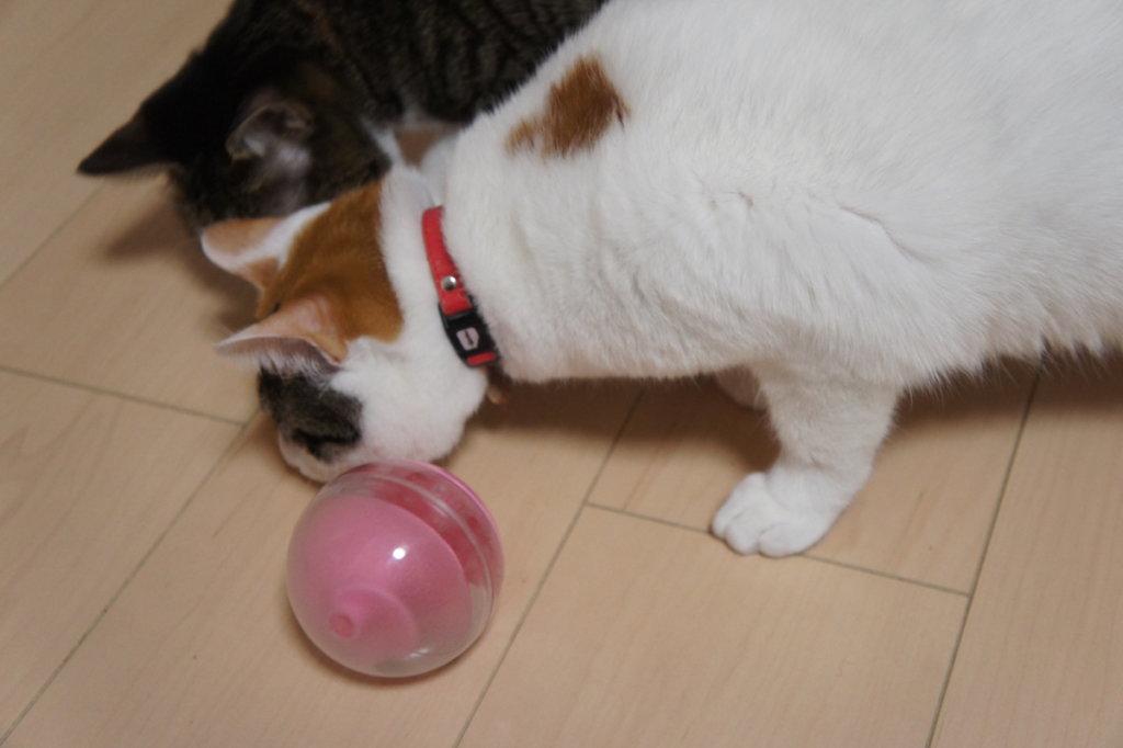 プチ トリート ボール 猫 おもちゃ 知育トイ おやつ