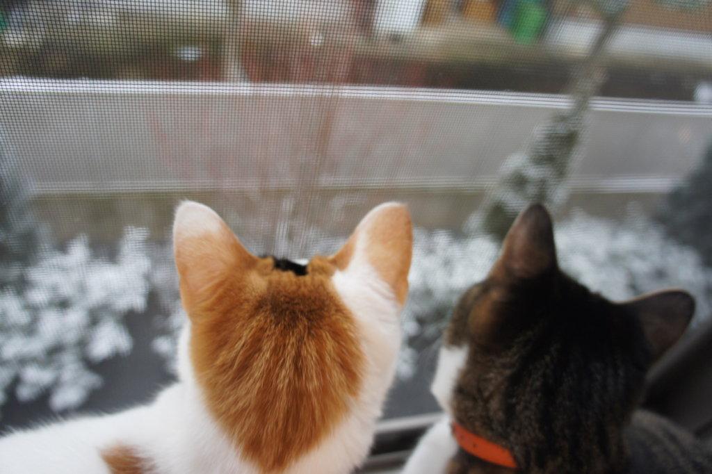 三毛猫 あめ キジ白 つゆ 保護猫 ニャルソック