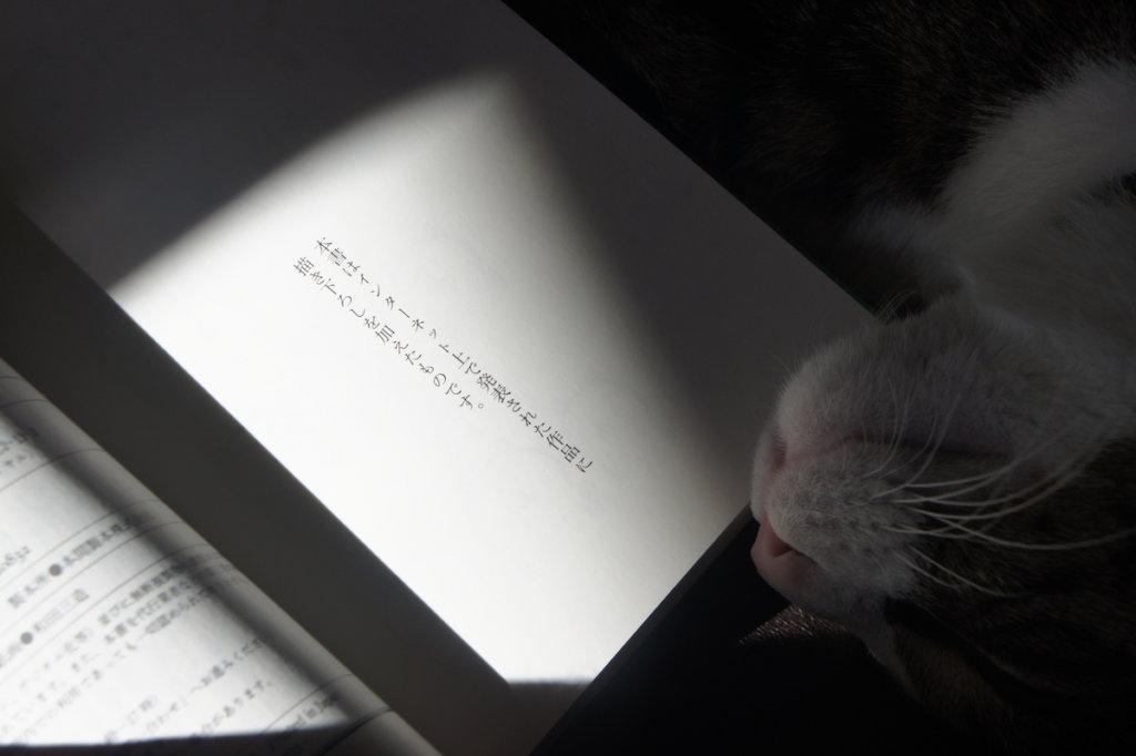 ねこくま、めしくま ねこくま めしくま 自分ツッコミくま エッセイ ナガノ レビュー 感想 書評