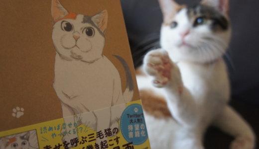 【書評:拾い猫のモチャ】Twitter発!ウチだけ?共感度高過ぎな猫4コマ漫画を読んだ感想です!