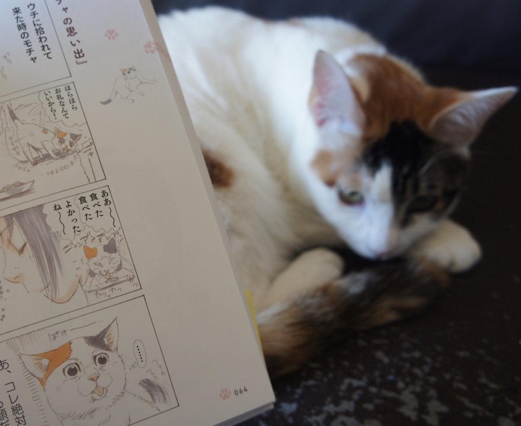 拾い猫のモチャ 感想 レビュー 書籍 三毛猫 保護猫 元野良猫
