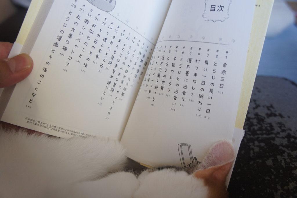 猫のとらじの長い1日 猫エイズ キャリア 元野良猫 保護猫 愛猫 最後の日 闘病