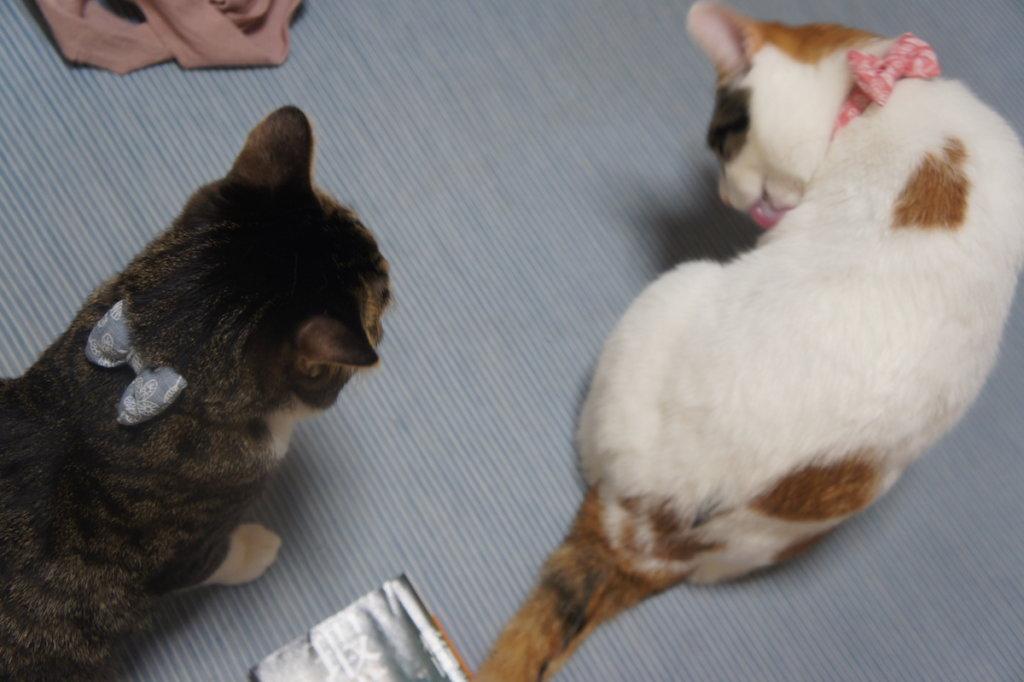 猫 首輪 鈴 リボン 三毛猫 キジ白