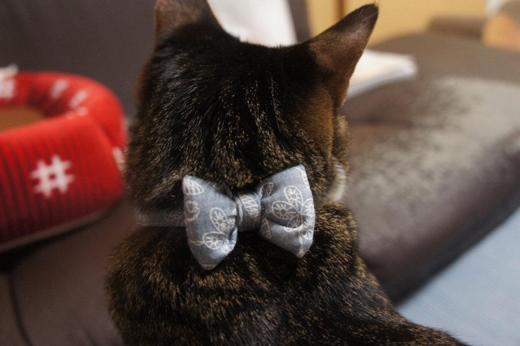 猫 首輪 鈴 リボン つゆ キジ白
