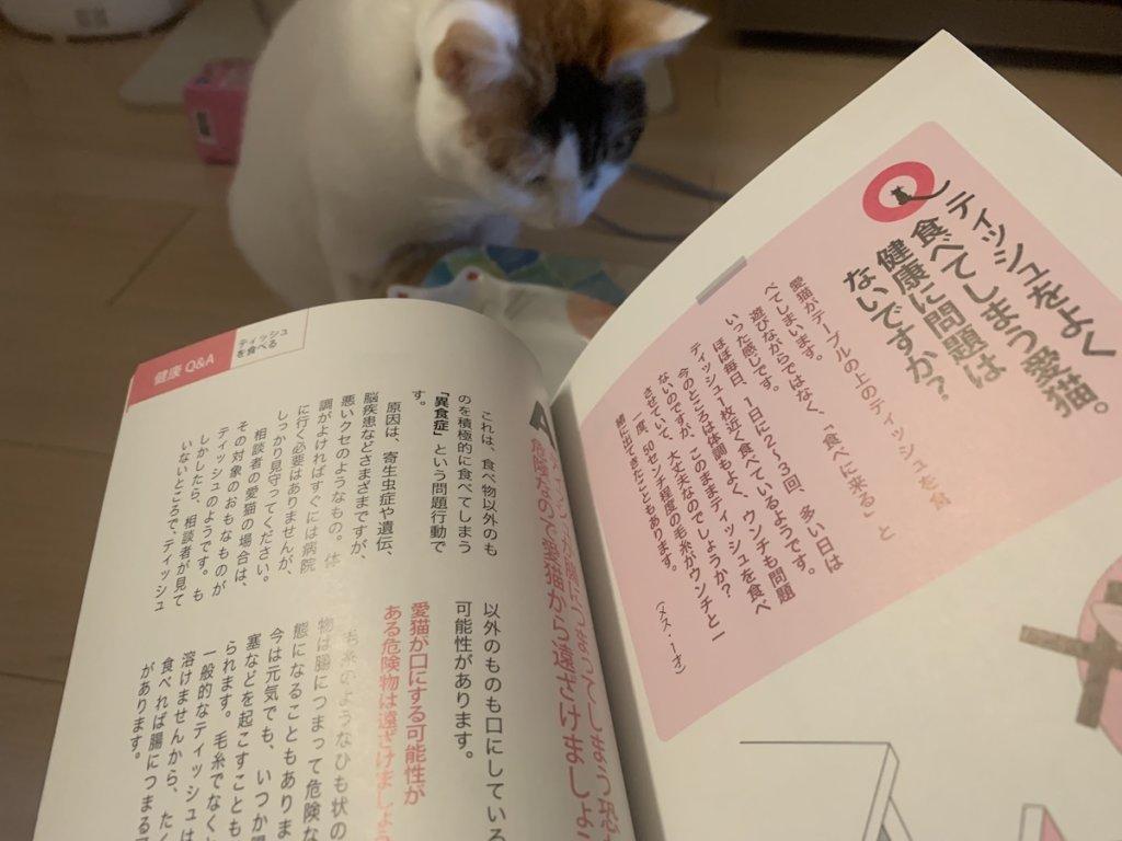 三毛猫 あめ ねこの気持ち 愛猫の家庭の医学事典