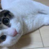 三毛猫 あめ 異食症 異物 嘔吐