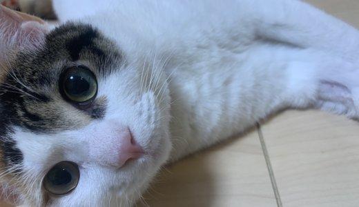嘔吐を繰り返し病院にあめはやっぱり布を誤飲してました。今後は「異食症」の猫として接します!