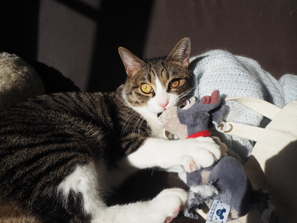 ディズニー トランプ ぬいぐるみ 猫 おもちゃ けりぐるみ 三毛猫 キジ白