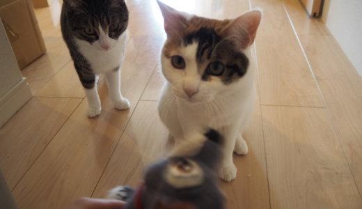 閲覧注意!?猫に気に入られたトランプ(ぬいぐるみ)の悲しい末路。そしてそのお役目を引き継ぐのは・・・