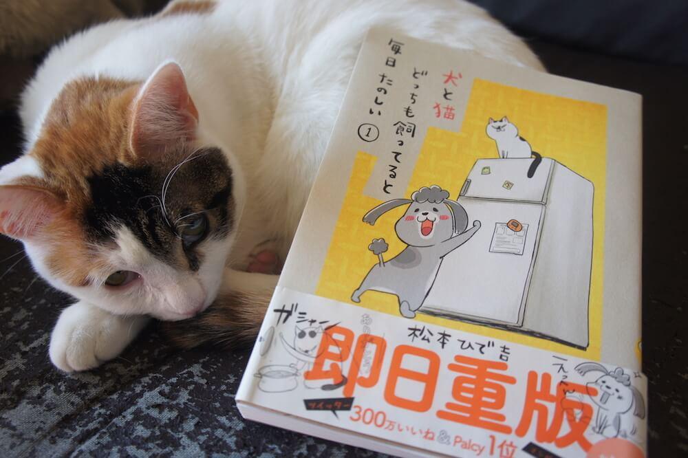 犬と猫どっちも飼ってると毎日たのしい 猫マンガ 犬マンガ Twitter 三毛猫