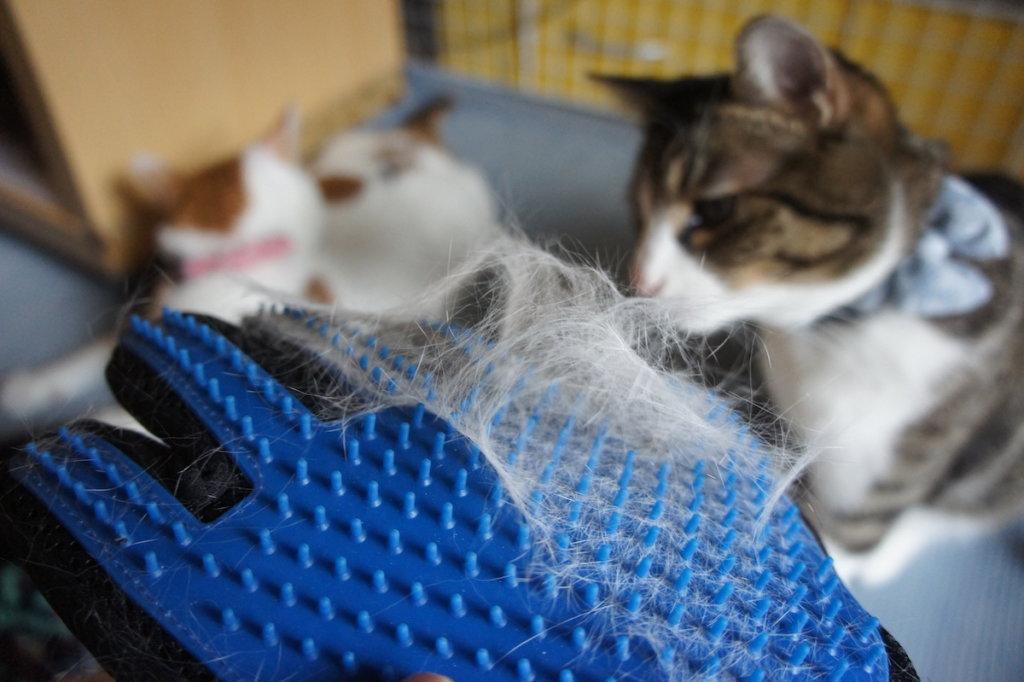 ブラシグローブ ブラシ型グローブ Tobbiheim ペットブラシ グローブセット マッサージブラシ  猫