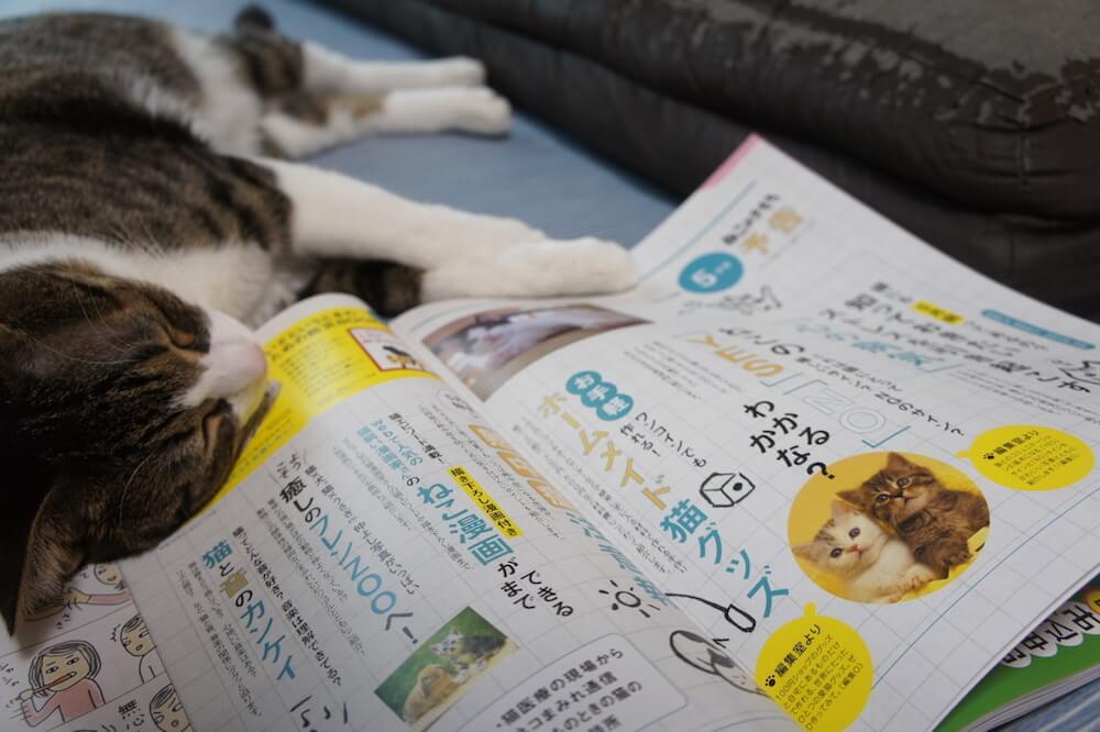 ねこのきもち 猫の気持ち 2019 04月号 購読 感想