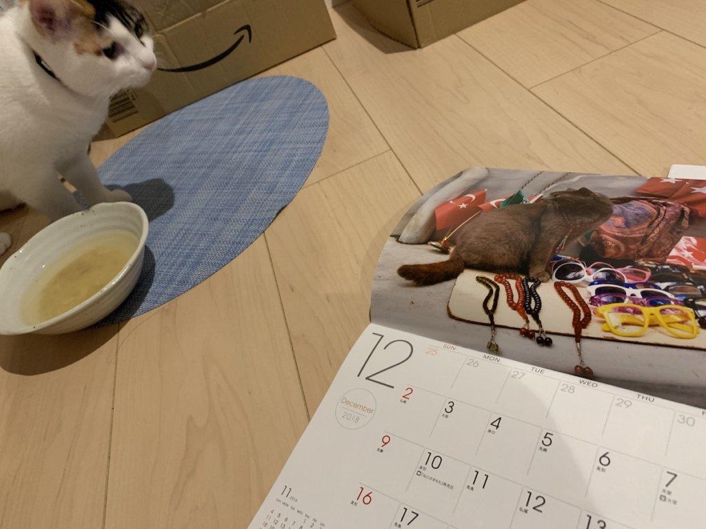 ねこのきもち 猫の気持ち 2019 01月号 購読 感想