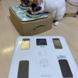 猫 体重 測定 三毛猫 キジ白