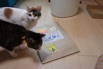 広い猫のモチャ 猫まんが Twitter 色紙 モノクロ 企画 三毛猫