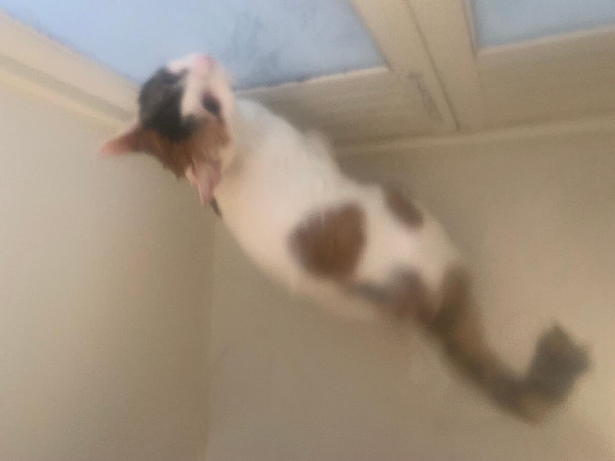 あめ 三毛猫 シャンプー お風呂 タライ