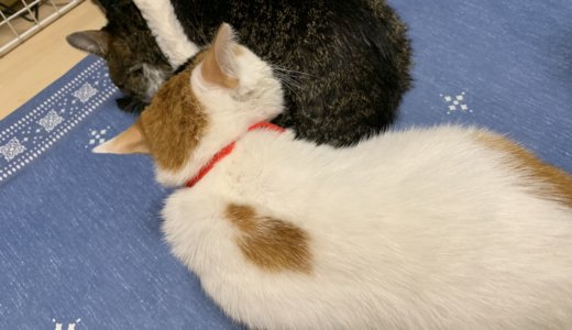 暖かくなっていたので猫シャンプー!体も成長したので、そろそろ慣れてきた?