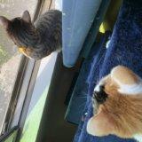 網戸 ストッパー アルミ 100均 ダイソー セリア 三毛猫 猫 キジ白 ニャルソック