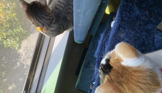 【猫の網戸対策】ダイソーの網戸ストッパーを設置して半年後。やはり要メンテナンスです!