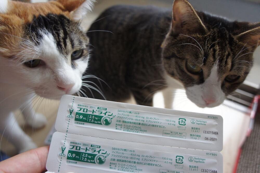 ブロードライン 駆虫薬 駆除薬 ノミ ダニ フィラリア 条虫 寄生虫 猫