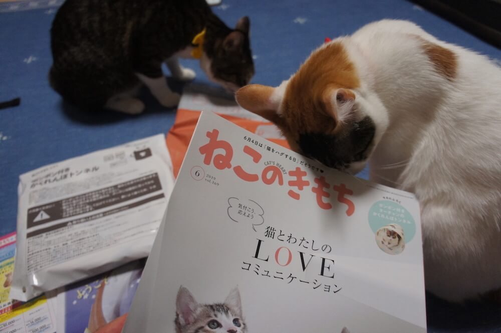 ねこのきもち 猫の気持ち 2019 06月号 購読 感想