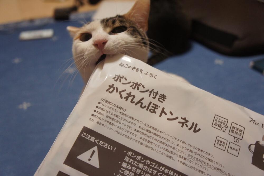 ねこのきもち 猫の気持ち 2019 06月号 購読 感想 トンネル