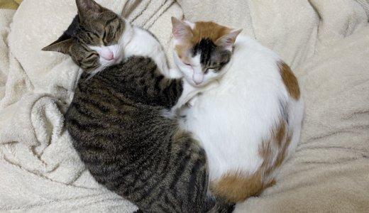 猫の闘病&看取り体験談。いつか必ず来るその時の為に読んでおくべきな本達。