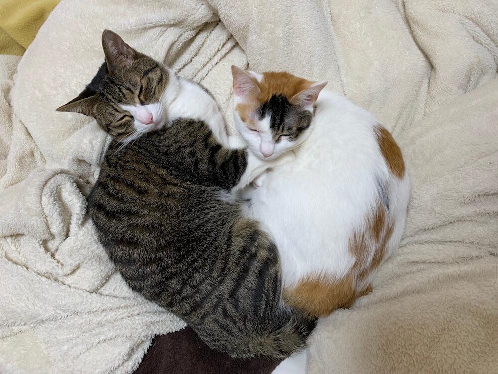 猫 看取り 旅立ち 闘病 体験談 別れ ペットロス