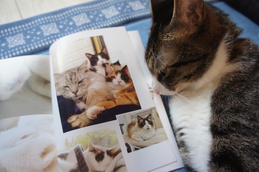 ねこいき 猫がいなけりゃ息もできない もみじ 三毛猫 病気の猫 愛猫 最後の日 闘病