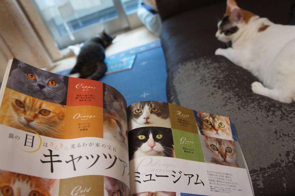 ねこのきもち 猫の気持ち 2019 07月号 購読 感想