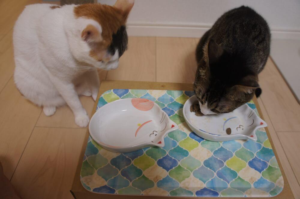 三毛猫 キジ白 猫 キャットフード ご飯 餌 一年