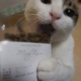 MogNyan モグニャン プレミアムキャットフード レビュー お試しパック 猫のご飯 三毛猫 キジ白