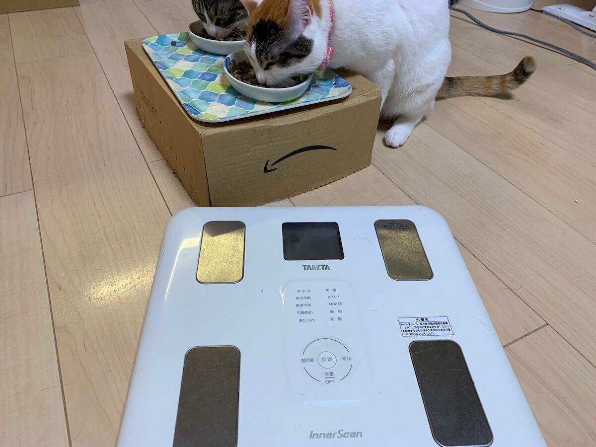 猫 体重 一年 推移 三毛猫 キジ白